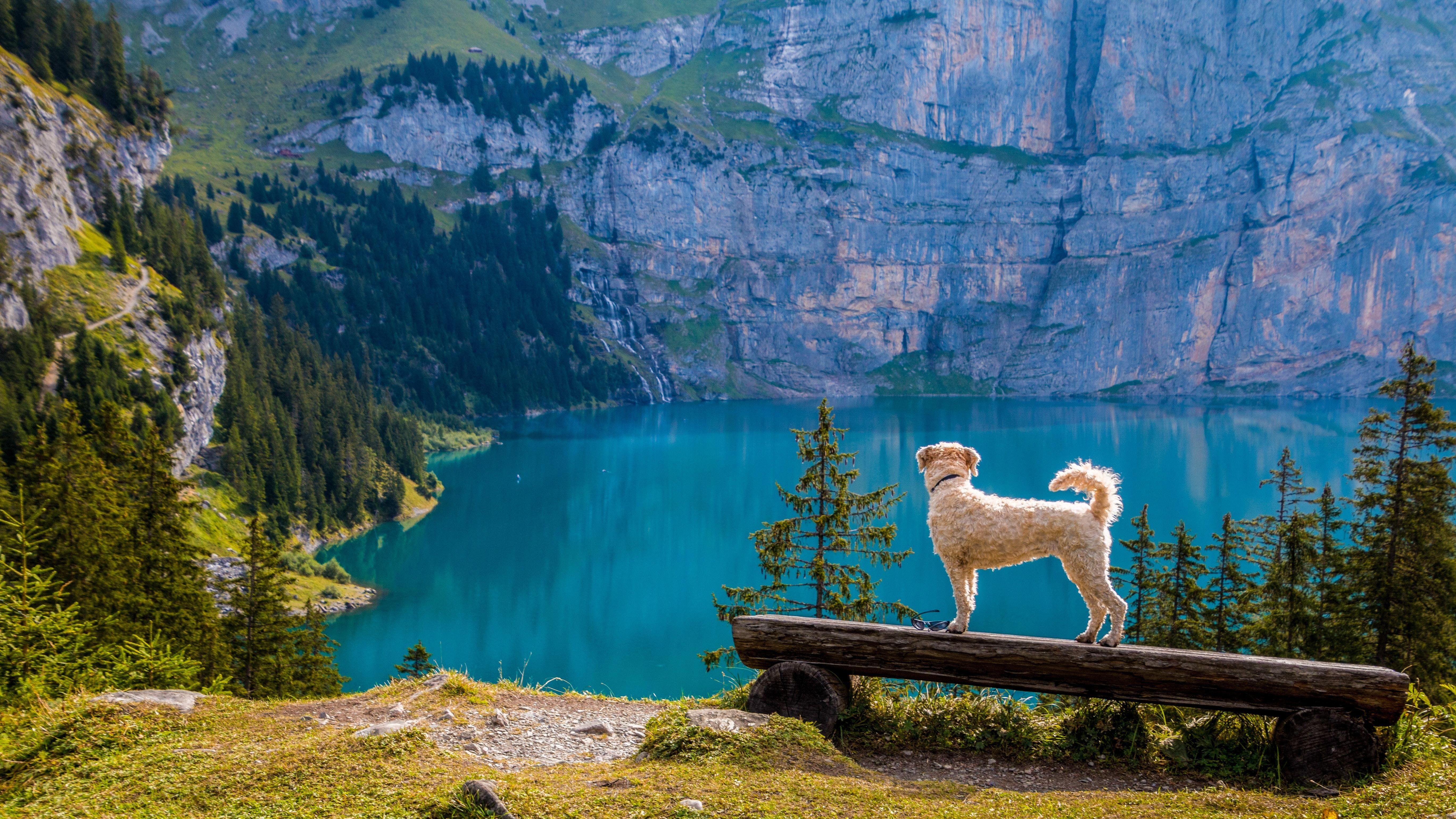 swan-on-lake-against-mountain-247522